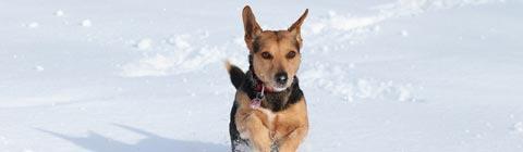 Die besten hundefreundlichen Wellnesshotels inmitten der Natur